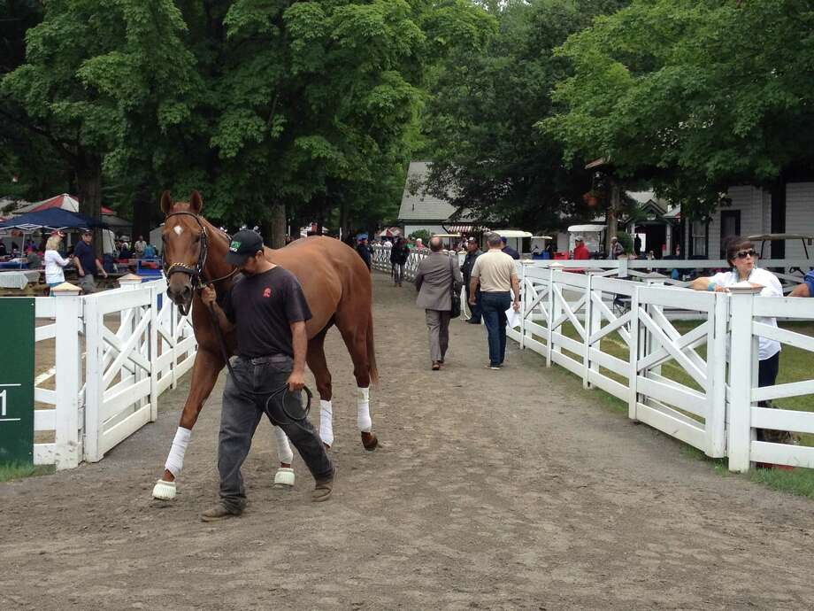 Horses head into the Saratoga paddock at all times of the day, or so it seems. They go before they race and they go in the mornings to learn how to behave on the days that they race. Like this good looking thoroughbred. He was on his way into the paddock Friday morning, and was more than happy to give the photographer a look. Thanks a lot, big guy.  —Tim Wilkin