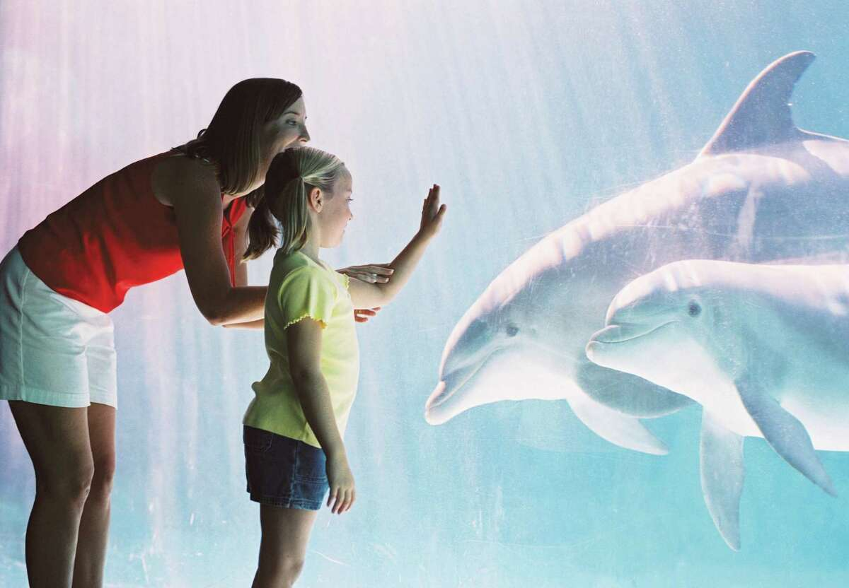 SeaWorld San Antonio is to see construction of a new dolphin habitat. The changes will feature a coastal theme.