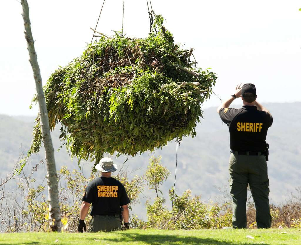 marijuana ban to have rare hearing in federal court sfgate an orange county sheriff s department narcotic investigator photographs a helicopter load as they clip up at