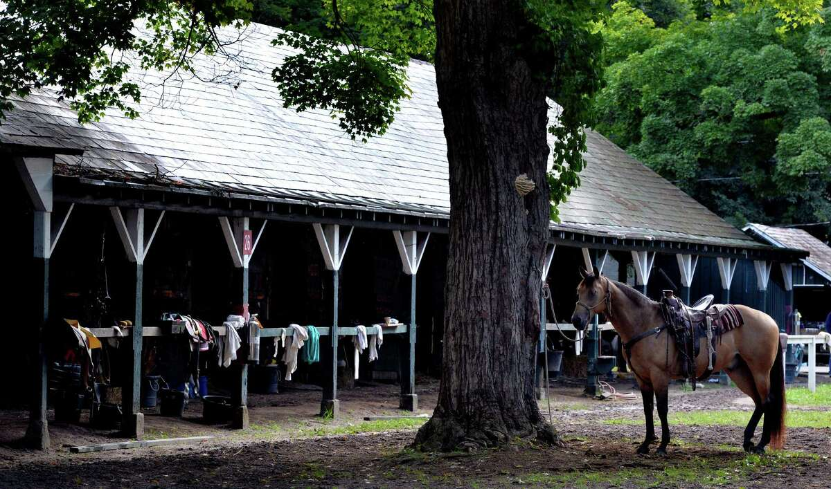 A lead pony waits patiently for his time to take one of his mates to the track at Thursday morning, Aug. 14, 2014, Saratoga Race Course in Saratoga Springs, N.Y. (Skip Dickstein/Times Union)
