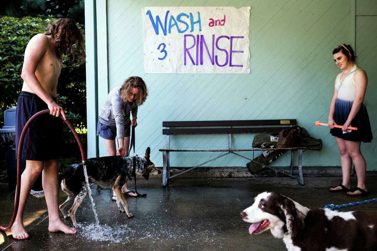 Owners prep their dogs at a wash and rinse station before taking the canines to the waters of Helene Madison Pool for an open dog swim - with no humans allowed - on Sunday, August 17, 2014, in Seattle, Wash. The unlikely event was made possible by the impending pool closure for preventive maintenance. The facility will reopen to the public on September 1, 2014.