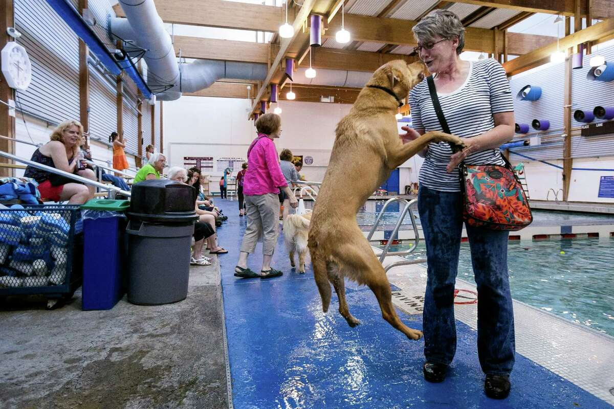 A dog leaps for joy at the sight of its owner during an open dog swim - no humans allowed - on Sunday, August 17, 2014, in Seattle, Wash. The unlikely event was made possible by the impending pool closure for preventive maintenance. The facility will reopen to the public on September 1, 2014.