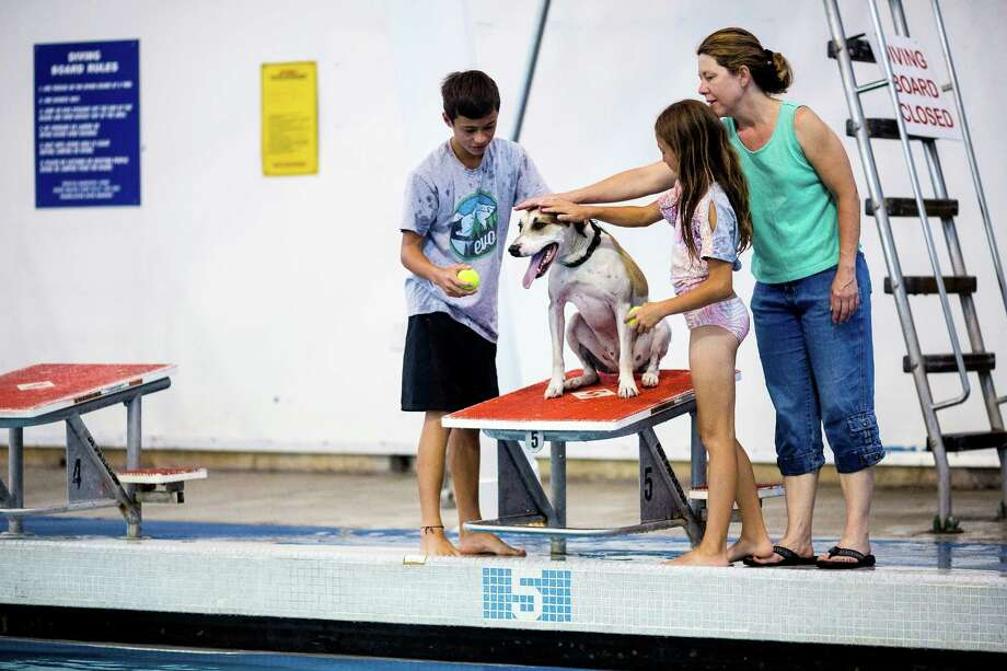 A family coaxes their canine to jump from the diving blocks during an open dog swim - no humans allowed - on Sunday, August 17, 2014, in Seattle, Wash. The unlikely event was made possible by the impending pool closure for preventive maintenance. The facility will reopen to the public on September 1, 2014. Photo: JORDAN STEAD, SEATTLEPI.COM / SEATTLEPI.COM