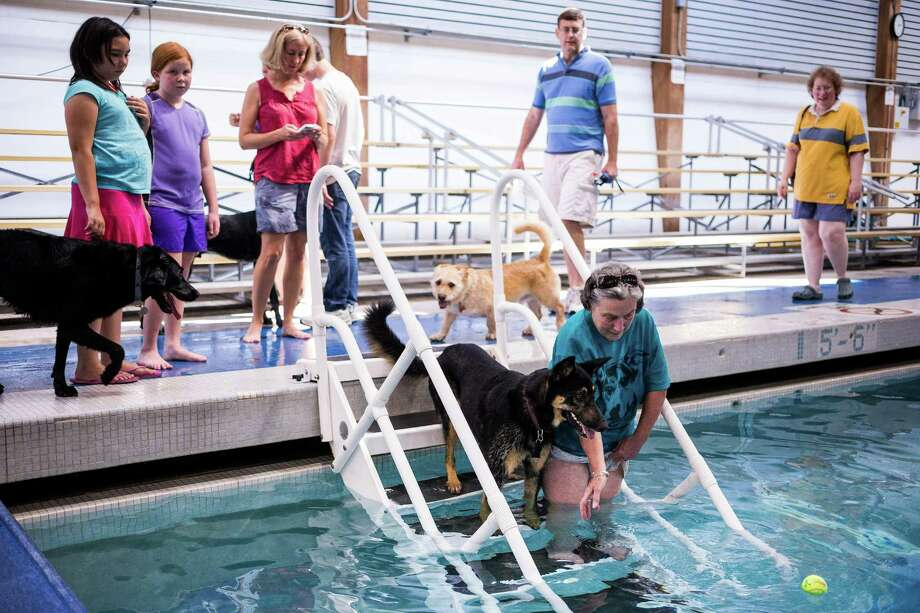 Owners cheer on their less-than-excited canines to get into the waters of Helene Madison Pool for an open dog swim - no humans allowed - on Sunday, August 17, 2014, in Seattle, Wash. The unlikely event was made possible by the impending pool closure for preventive maintenance. The facility will reopen to the public on September 1, 2014. Photo: JORDAN STEAD, SEATTLEPI.COM / SEATTLEPI.COM