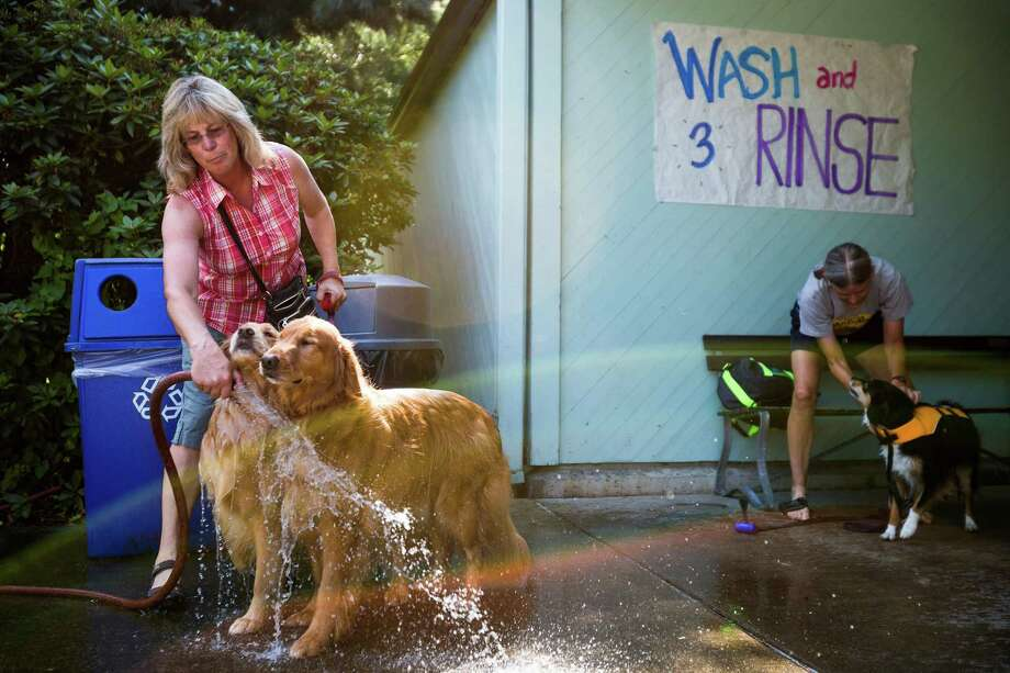 Owners prep their dogs at a wash and rinse station before taking the canines to the waters of Helene Madison Pool for an open dog swim - with no humans allowed - on Sunday, August 17, 2014, in Seattle, Wash. The unlikely event was made possible by the impending pool closure for preventive maintenance. The facility will reopen to the public on September 1, 2014. Photo: JORDAN STEAD, SEATTLEPI.COM / SEATTLEPI.COM