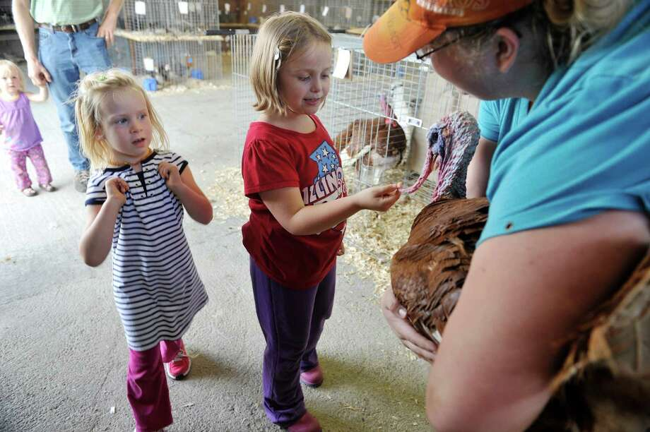 Maggie VanDuyn, left, 3,  from Kansas City, MO and Lillian Murphy, center, 7, from White Creek look over a turkey that Valerie Arbuckle, assistant youth poultry superintendent for Washington Co., shows the girls as set up continues for the Washington County Fair on Sunday, August 17, 2014, in Greenwich, N.Y.  The fair opens at 5 p.m. on Monday.  (Paul Buckowski / Times Union) Photo: Paul Buckowski / 00028207A