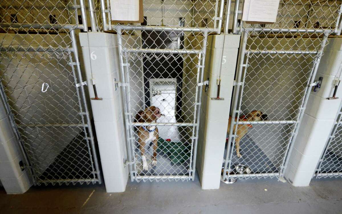 Dogs are contained in separate pens Inside Schenectady's animal shelter Tuesday, Aug. 12, 2014, located at the city sewage treatment plant on Technology Dr. in Schenectady, N.Y. (Will Waldron/Times Union)