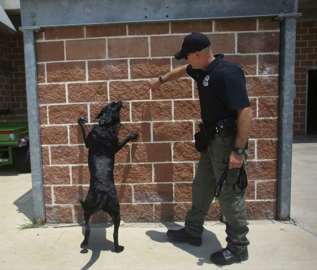 Arson investigator Justin Davis directs Kai, the Fire Department's accelerant-detection dog, during a session at the San Antonio Fire Department's training academy. Kai is a former shelter resident whose future once looked bleak.