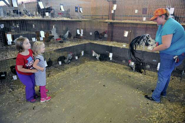 Lillian Murphy, left, 7, from White Creek and Maggie VanDuyn, 3, from Kansas City, MO stand a bit back as Valerie Arbuckle, assistant youth poultry superintendent for Washington Co., shows the girls a rooster as set up continues for the Washington County Fair on Sunday, August 17, 2014, in Greenwich, N.Y.  The fair opens at 5 p.m. on Monday.  (Paul Buckowski / Times Union) Photo: Paul Buckowski / 00028207A