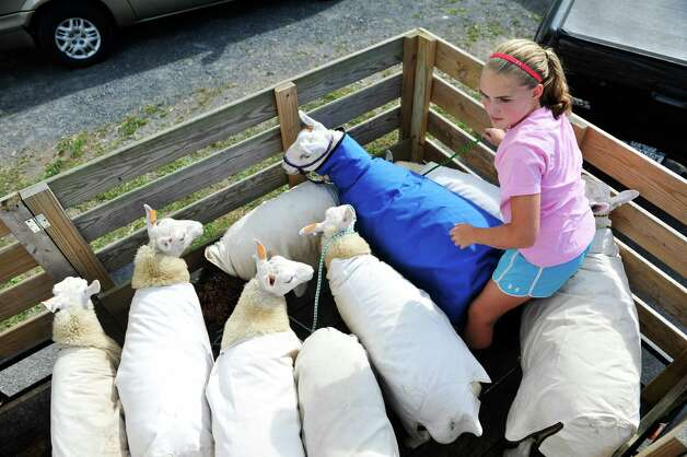 Fiona Mooney, 11, from Cambridge and a member of the 4-H, works on unloading her family's sheep from Ash Grove Farm,  as set up continues for the Washington County Fair on Sunday, August 17, 2014, in Greenwich, N.Y.  The fair opens at 5 p.m. on Monday.  (Paul Buckowski / Times Union) Photo: Paul Buckowski / 00028207A