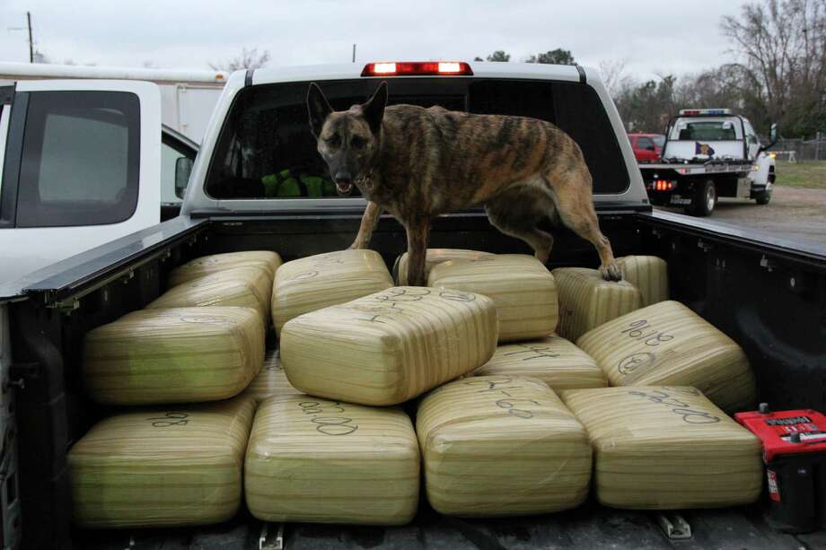 Senna has help Montgomery County deputies find over a $1 million of narcotics, according to MCSO.  In her first two years she has already been involved in over 200 busts. Photo: Montgomery County Sheriff's Office