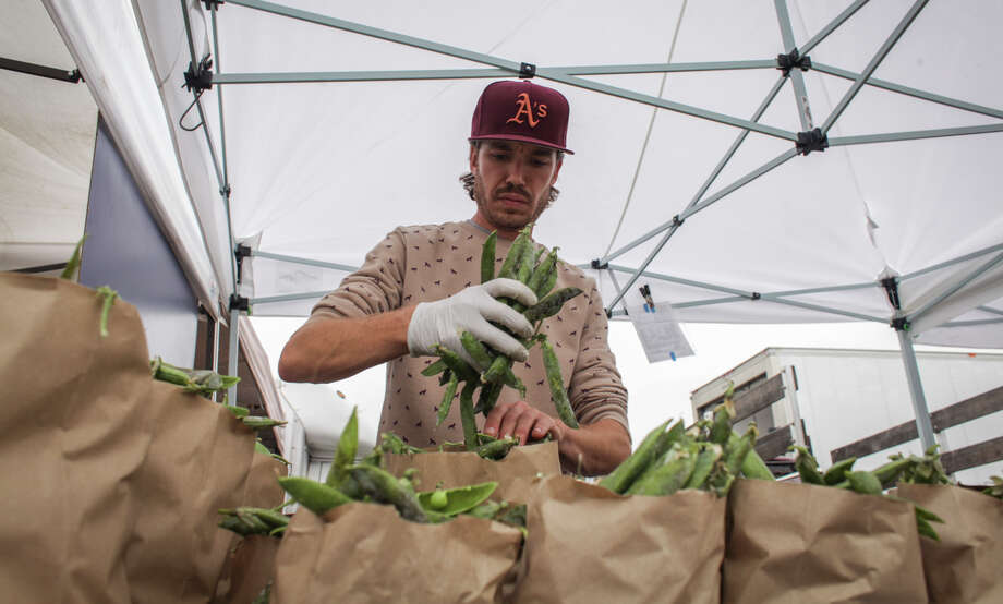 Roscoe Rowe, a vender for Lacopi Farms, packs beans at the San Rafael Farmers' Market on August 10th 2014. Photo: Sam Wolson, Contributor / Special To The Chronicle / ONLINE_YES