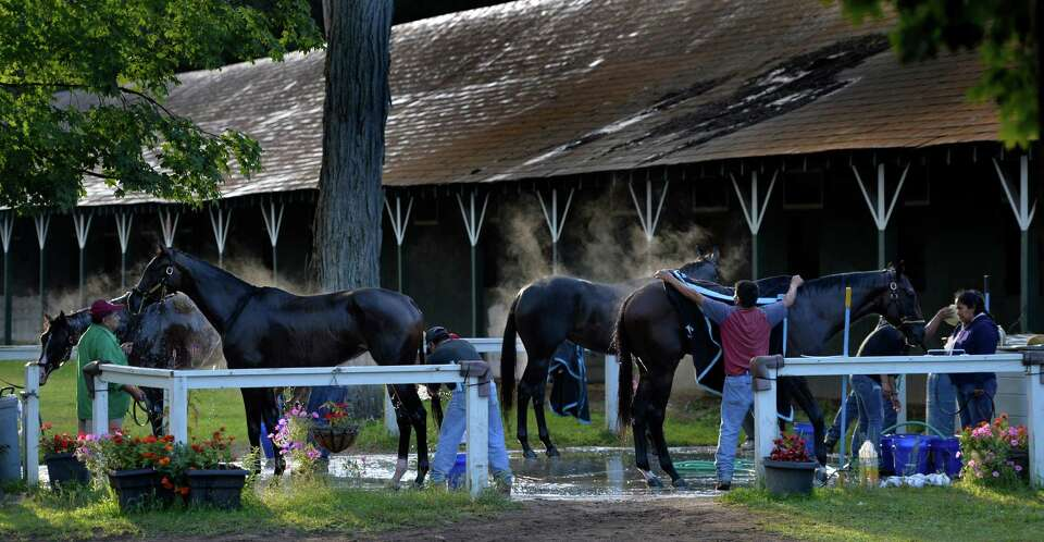 Steam rises from horses after their bath Monday morning, Aug. 18, 2014, at  Saratoga Race Course in