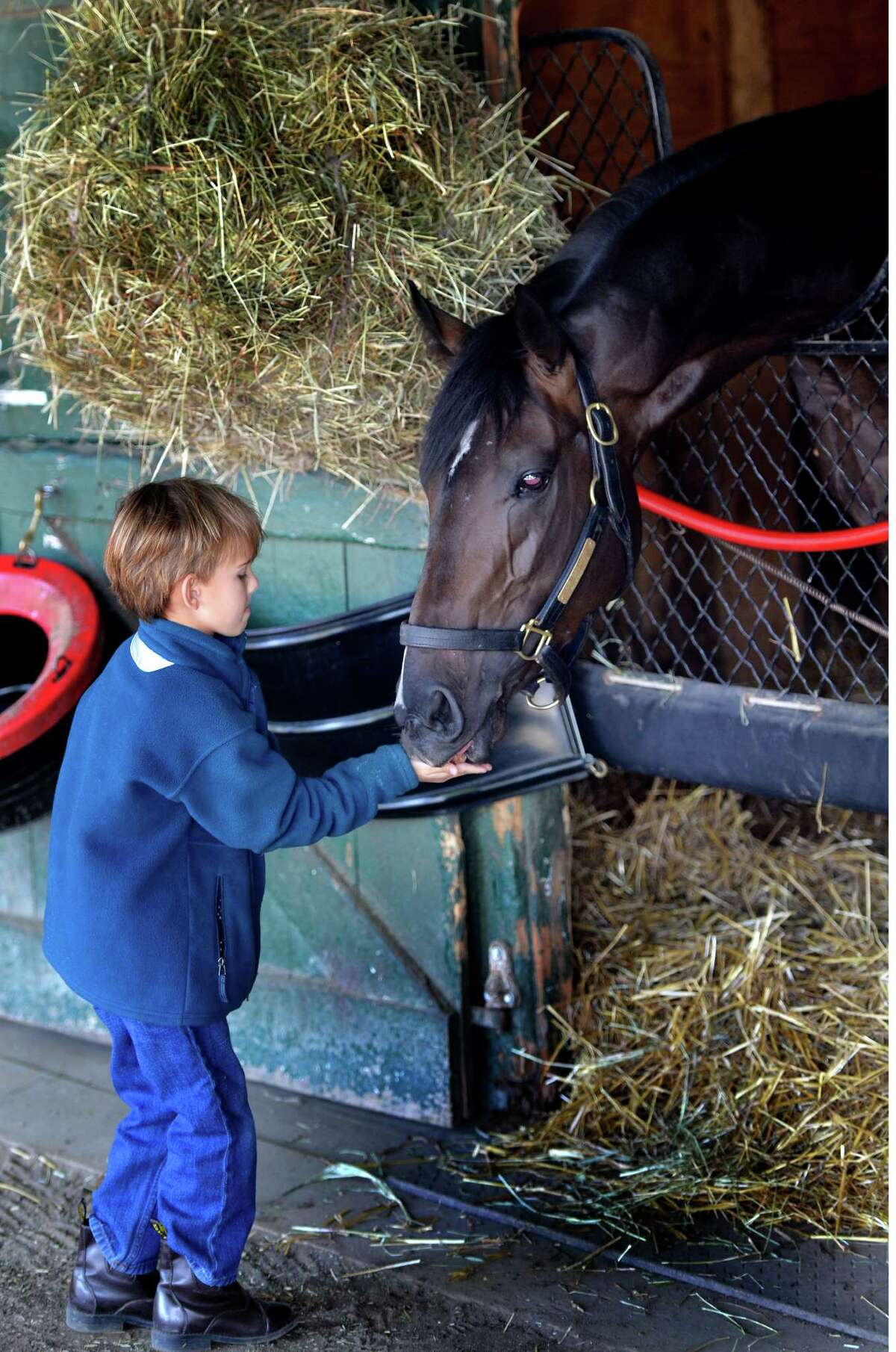 Ogden Mills Phipps, 6, gives a horse treat to Travers entrant Mr. Speaker in the Phipps Stables barn Monday morning, Aug. 18, 2014, at the Oklahoma Training Center in Saratoga Springs, N.Y. (Skip Dickstein/Times Union)