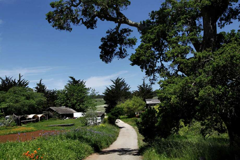 University of California – Santa Cruz (Santa Cruz, California)Reefer madness (10) Photo: PRESTON GANNAWAY, Special To The Chronicle / ONLINE_YES