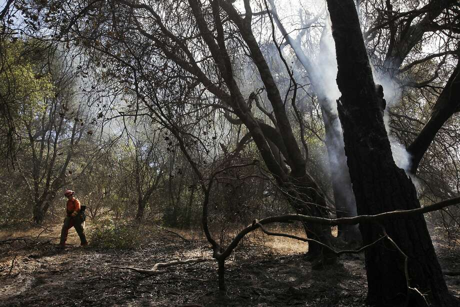 An inmate firefighter trims branches and mops up as a tree continues to smolder nearby from the Junction Fire that started midday Monday and quickly spread, causing evacuation of 13,000 people. Photo: Leah Millis, The Chronicle