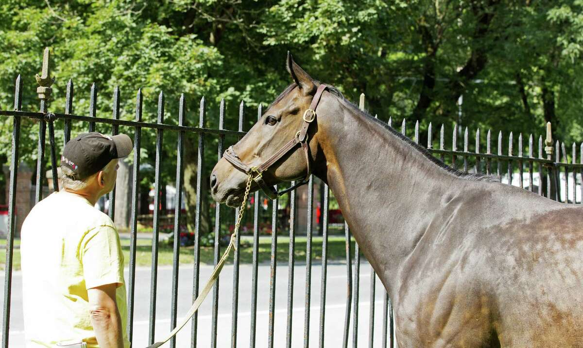 Take Down Two peers through fence at activity on Union Avenue -- with his new trainer Gary Gullo. Gullo's barn is next to Union Avenue near East Avenue. (Tom Keyser)