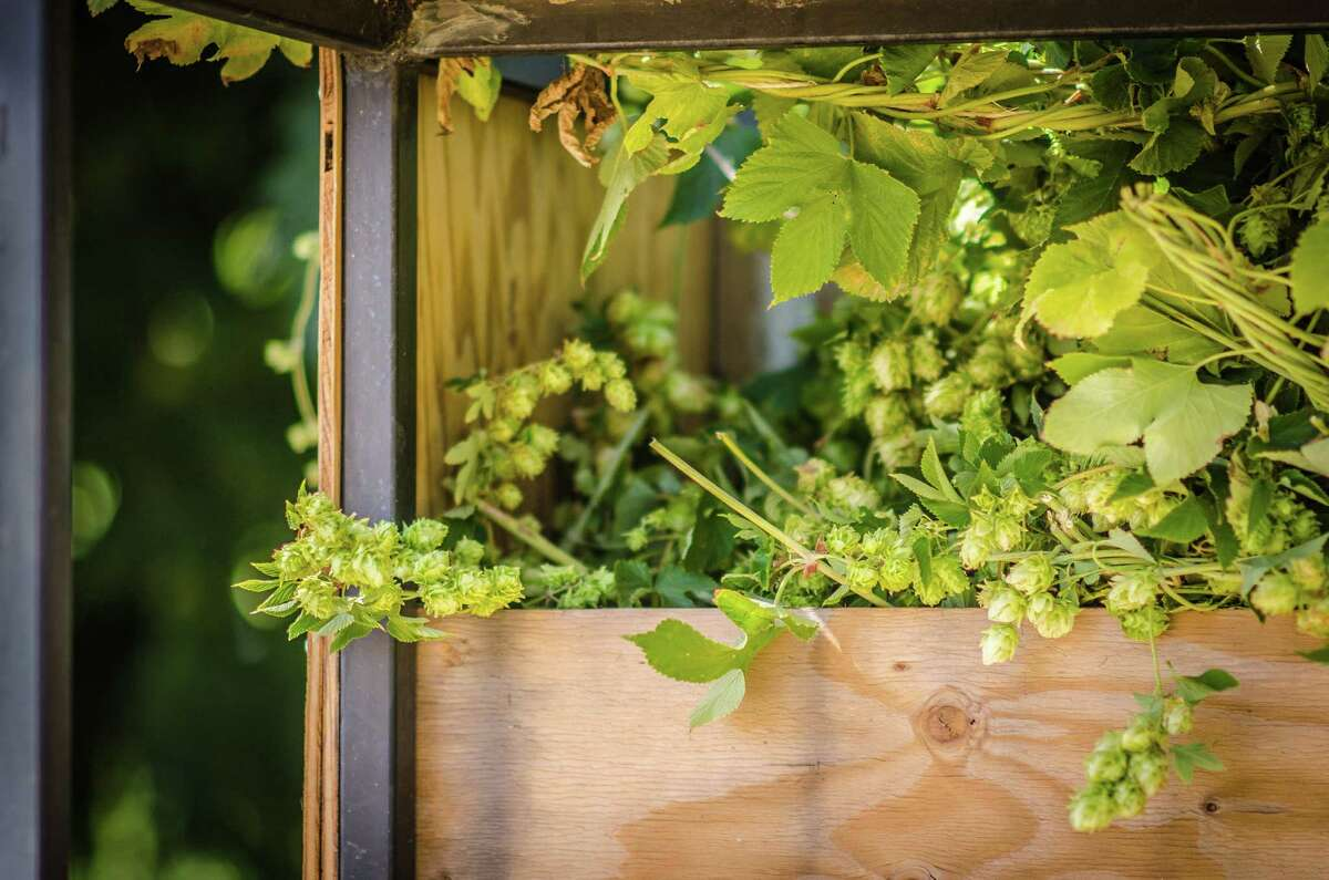 Hops-Meister Farm in Clear Lake is located in what was once one of the most productive hop-growing regions in the country.
