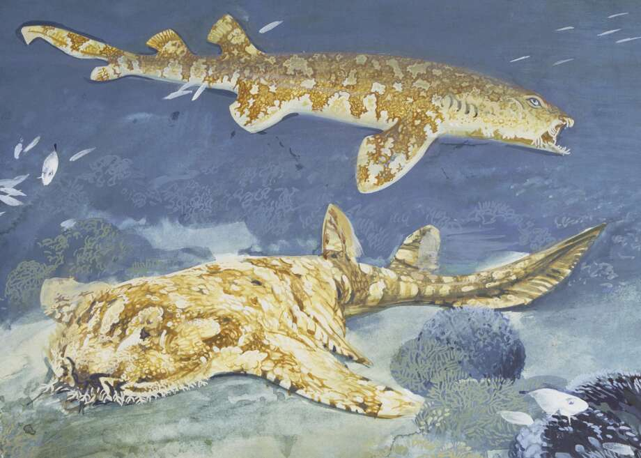 8. Species name: OrectolobusCommon name: WobbegongNon-fatal attacks: 19Fatal attacks: 0 Photo: De Agostini Picture Library, Getty Images