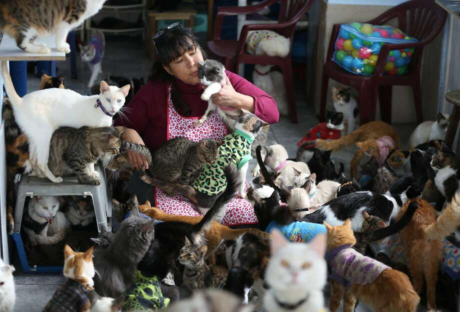 Maria Torero plays with some of the 175 cats with leukemia in her Lima apartment. Photo: Martin Mejia, Associated Press