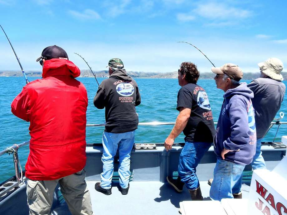 Three fishermen hook fish at once aboard the Wacky Jacky on a salmon-fishing trip out of San Francisco's Fisherman's Wharf. Photo: Brian Murphy