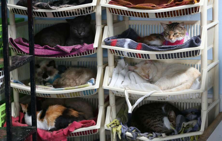 Stacks of cats:In a house of 175 kitties, finding a bed can be a challenge. Fortunately, homeowner Maria Torero has created multiple bunks out of plastic shelving. Torero, who lives in Lima, Peru, estimates she spends $1,785 a month caring for the cats, all of whom suffer from feline leukemia. Half that sum comes from donations, and the other half from her job as a private nurse. Photo: Martin Mejia, Associated Press