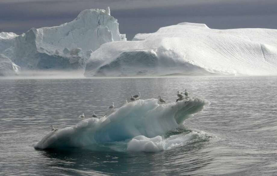Seagulls stand on an iceberg floating in a fjord near Ilulissat in Greenland, 16 August 2007.