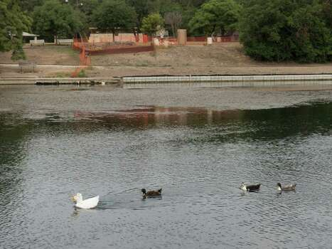 At Landa Park Lake, crews have repaired banks, flow gates and other  flood-control structures built as long as a century ago. A gate between  the lake and the old river channel feeding the Comal River was repaired a  few weeks ago, allowing the city of New Braunfels to maintain flows in  compliance with the conservation plan, which obtained federal approval. Photo: Billy Calzada, San Antonio Express-News / San Antonio Express-News