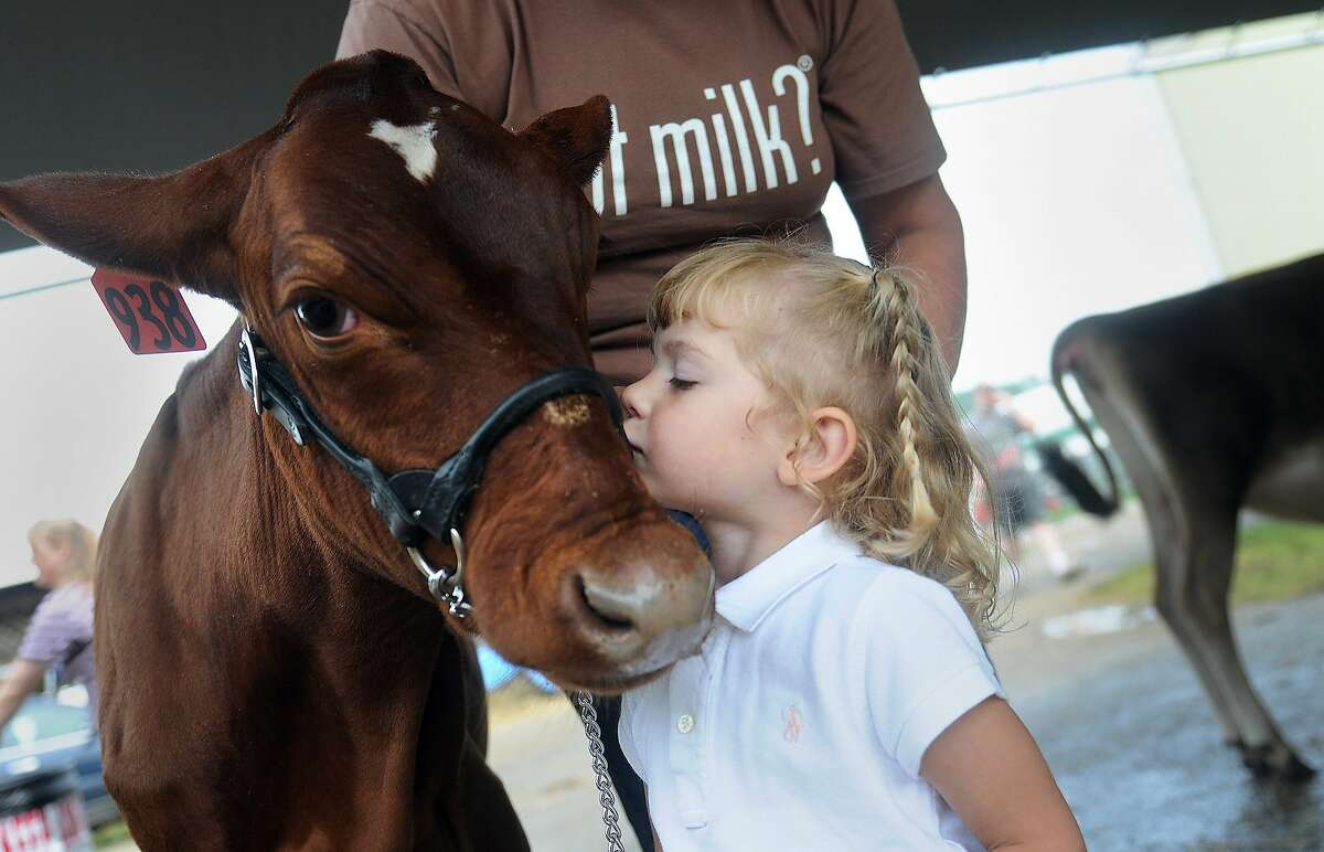 Lilyann Berkey, 3, of Somerset, Pa., kisses her shorthorn calf Josie prior to the youth showmanship competition during the dairy livestock show at the Somerset County Fair in Meyersdale, Pa. (AP Photo/The Tribune-Democrat, Thomas Slusser)