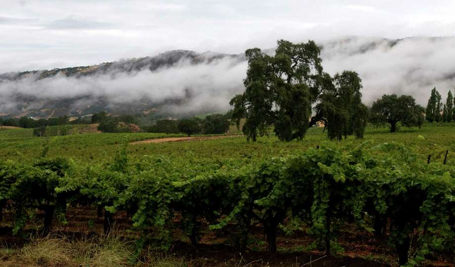 Carmel Valley has its virtues and Heller Estate winery, with a particular affinity for Chenin Blanc, is making the most of the area's strengths. Photo: Chad Ziemendorf / Chad Ziemendorf / The Chronicle 2010 / SFC