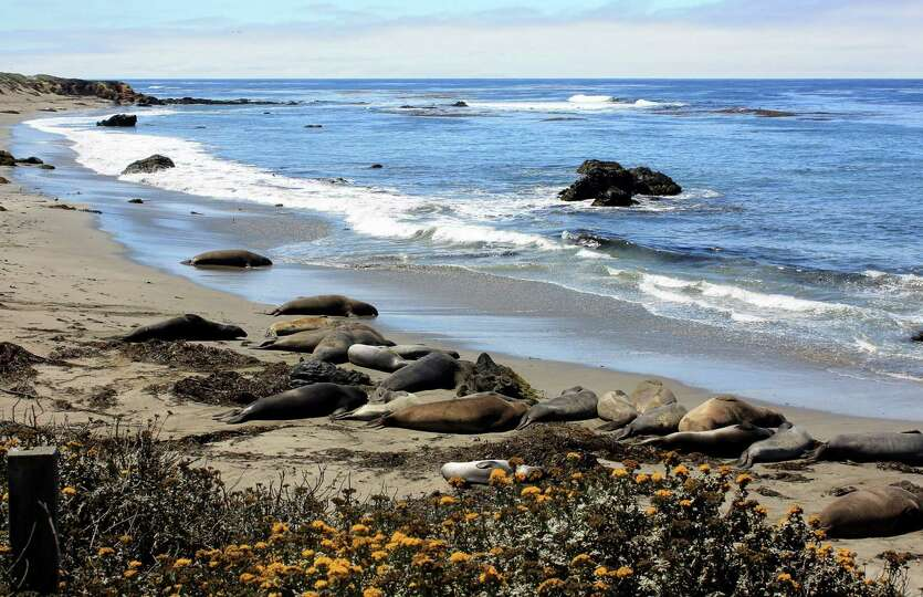 Elephant seals sleep on a beach near San Simeon along the California coast. (Chelsey Lewis/Milwaukee