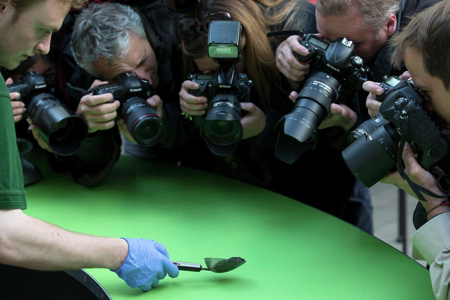 Photographers capture a 'mossy frog' being weighed at 37g during the annual weight-in ZSL London Zoo on August 21, 2014 in London, England. The height and mass of every animal in the zoo, of which there are over 16,000, is recorded and submitted to the Zoological Information Management System. This is combined with animal measurement data collected from over 800 zoos and aquariums in almost 80 countries, from which zoologists can compare information on thousands of endangered species. Photo: Oli Scarff, Getty Images / 2014 Getty Images
