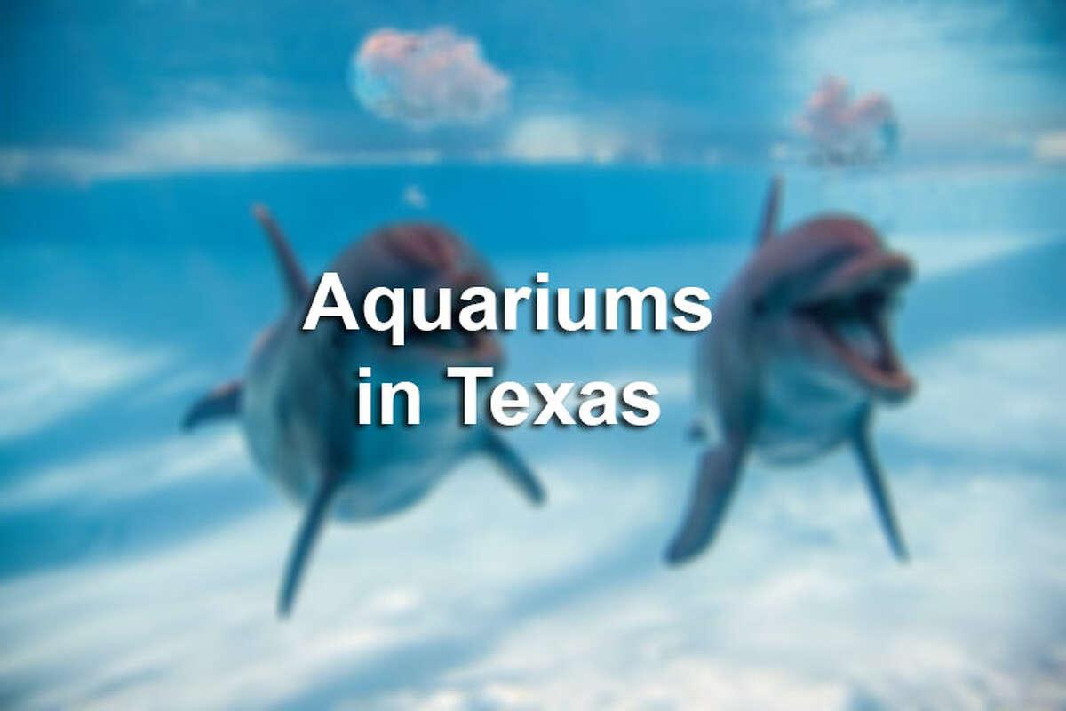 The Texas State Aquarium in Corpus Christi was named second best aquarium in North America.Click through the slideshow to see other aquariums in Texas.