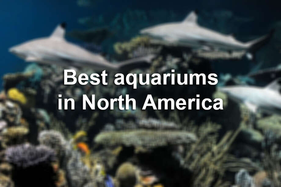 The Texas State Aquarium in Corpus Christi was named the second best aquarium in North America.Click through the slideshow for the 20 best aquariums on USA Today's list.