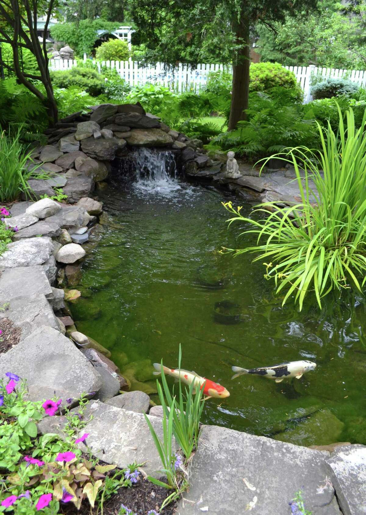 The pond is a main feature of the Sheehan garden.