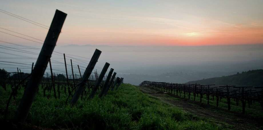 The sun rises over a light fog and the dormant grape vines of Mount Eden Vineyards in the Santa Cruz Mountains on Wednesday, February 17, 2010. Photo: Chad Ziemendorf / Special To The Chronicle / SFC