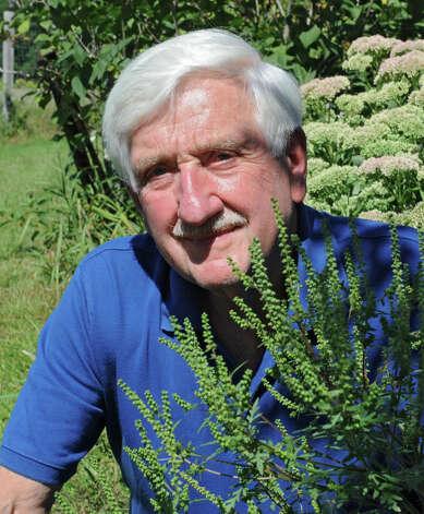 Environmental health scientist David Carpenter kneels by some ragweed on his property on Tuesday, Aug. 19, 2014 in Guilderland, N.Y.  (Lori Van Buren / Times Union) Photo: Lori Van Buren / 00028238A