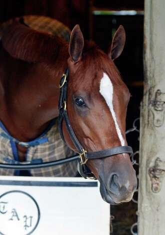 Princess of Sylmar enjoys the quiet time in her stall at the Oklahoma Training Center Thursday morning, Aug. 21, 2014, in Saratoga Springs, N.Y.   (Skip Dickstein/Times Union) Photo: SKIP DICKSTEIN