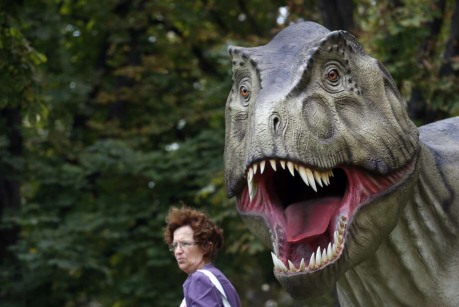 "A visitor passes by an exhibit during the Dinosaurs exhibition in Belgrade, Serbia, Thursday, Aug. 21, 2014. ''Dino Park"" has opened at Belgrade's Kalemegdan Fortress. (AP Photo/Darko Vojinovic) Photo: Darko Vojinovic, Associated Press"