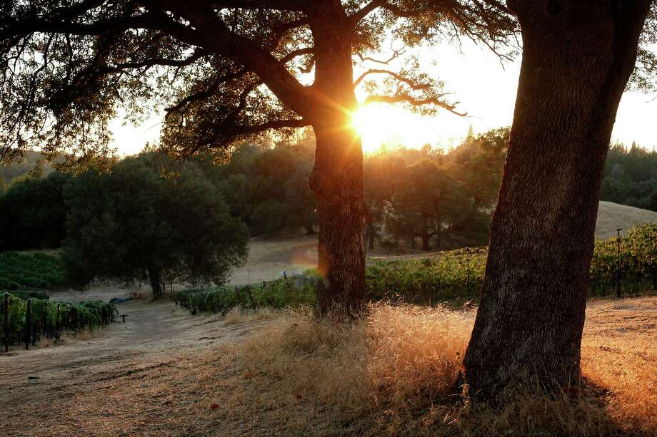 Shake Ridge Vineyards in Sutter Creek, Calif., on Monday, August 18, 2014. Photo: Sarah Rice / Special To The Chronicle / ONLINE_YES
