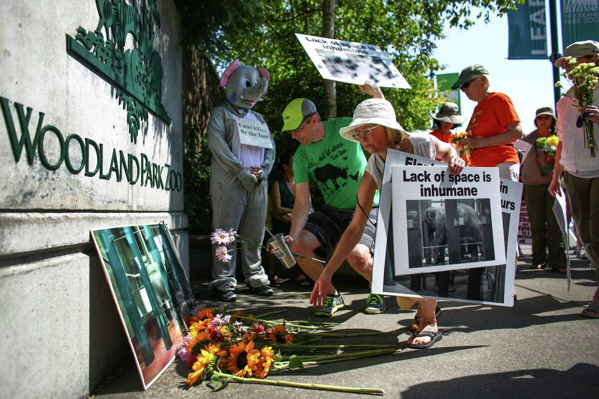 People place flowers at the gates of Woodland Park Zoo during a vigil after the death of Woodland Park Zoo's African elephant Watoto. The 45 year-old elephant was euthanized after she fell ill in her enclosure. Friends of Woodland Park Zoo Elephants organized the gathering to mourn the death and to call for the retirement of Bamboo and Chai, the other two elephants on display at the zoo. Photographed on Saturday, August 23, 2014.