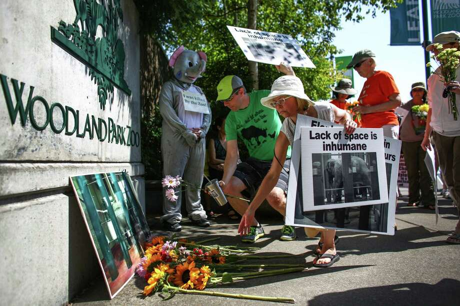 People place flowers at the gates of Woodland Park Zoo during a vigil after the death of Woodland Park Zoo's African elephant Watoto. The 45 year-old elephant was euthanized after she fell ill in her enclosure. Friends of Woodland Park Zoo Elephants organized the gathering to mourn the death and to call for the retirement of Bamboo and Chai, the other two elephants on display at the zoo. Photographed on Saturday, August 23, 2014. Photo: JOSHUA TRUJILLO, SEATTLEPI.COM / SEATTLEPI.COM