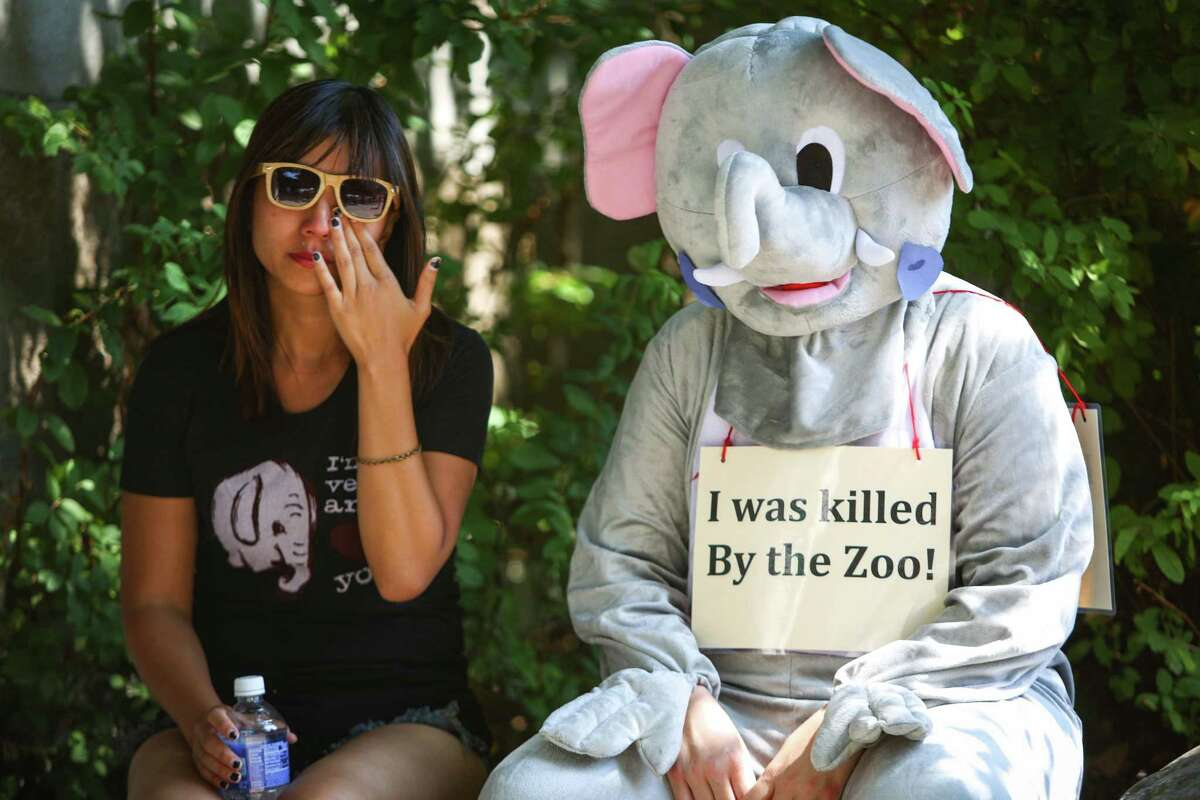C.C. Chan wipes away tears as she sits next to Meaghan Casey, in costume, during a vigil after the death of Woodland Park Zoo's African elephant Watoto. The 45 year-old elephant was euthanized after she fell ill in her enclosure. Friends of Woodland Park Zoo Elephants organized the gathering to mourn the death and to call for the retirement of Bamboo and Chai, the other two elephants on display at the zoo. Photographed on Saturday, August 23, 2014.