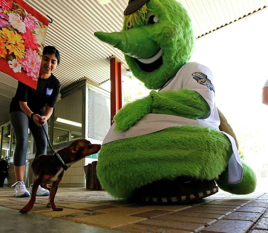 "Volunteer Aishu Venkataraman, left, looks on as ""Bradley"" sniffs the Houston Astros mascot Orbit during The Houston Humane Society (HHS) ""Meet the Mascots"", family-friendly event Saturday, Aug. 23, 2014, in Houston. Photo: James Nielsen, Houston Chronicle / © 2014  Houston Chronicle"