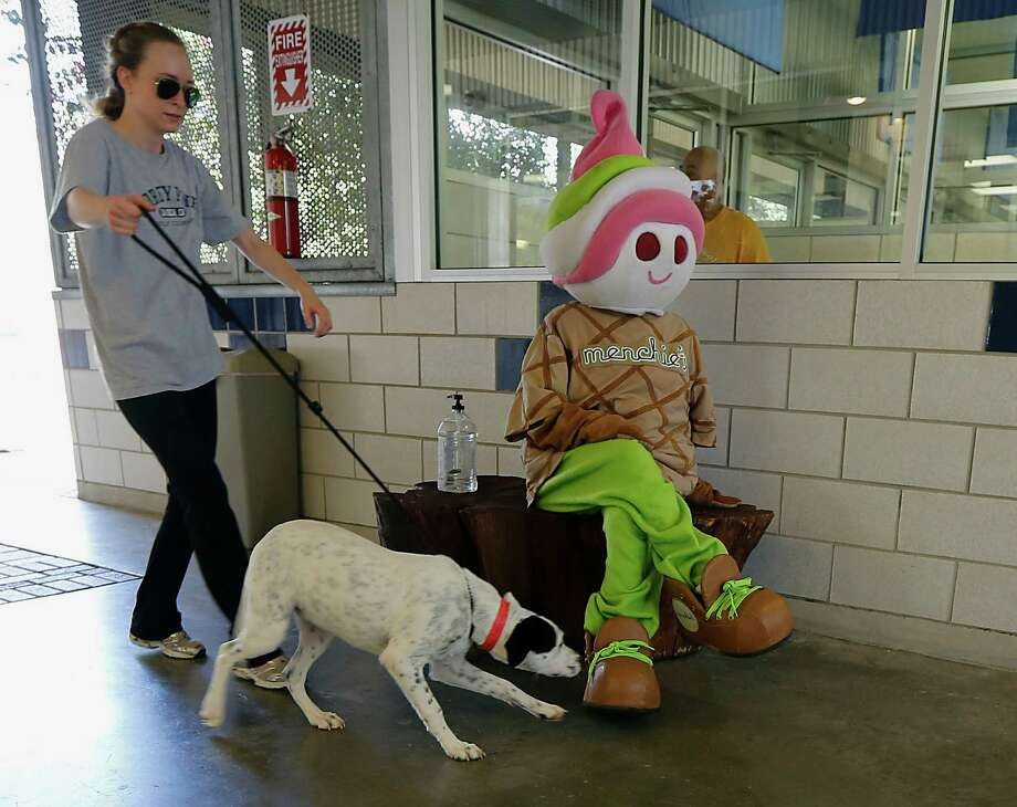 "Volunteer Ashley Hill left, walks ""Mia"" as she sniffs Menchie's Frozen Yogurt mascot Menchie during The Houston Humane Society (HHS) ""Meet the Mascots"", family-friendly event Saturday, Aug. 23, 2014, in Houston. Photo: James Nielsen, Houston Chronicle / © 2014  Houston Chronicle"