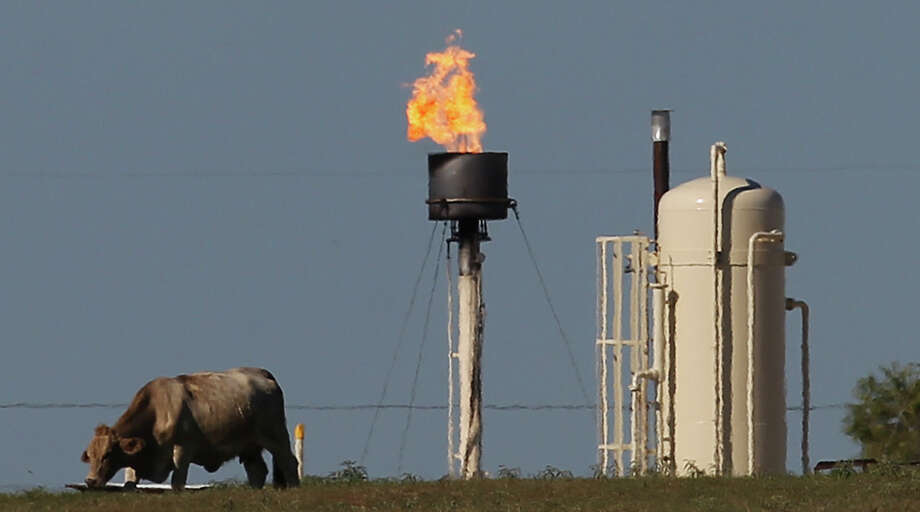 Cattle graze in Karnes City as a flaring stack burns off excess natural gas, releasing pollutants and greenhouse gases in vast amounts. Photo: Kin Man Hui, Staff / ©2014 San Antonio Express-News