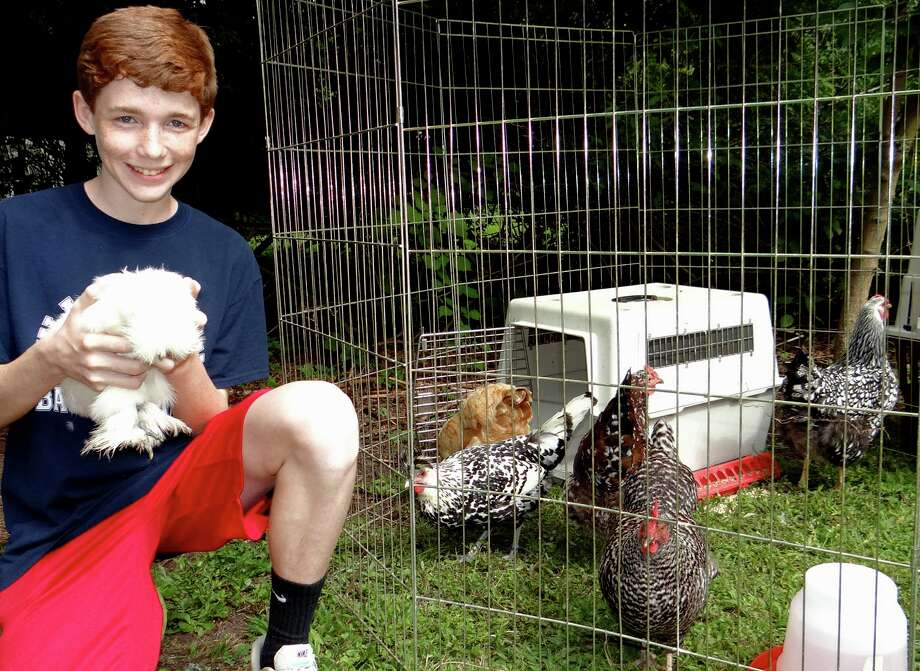 "Sam Walker, 14, holds ""Betty White,"" a white Silkie chicken, at the Greenfield Hill Grange Agricultural Fair on Saturday. Walker cares for 40 chickens. Photo: Mike Lauterborn / Fairfield Citizen"