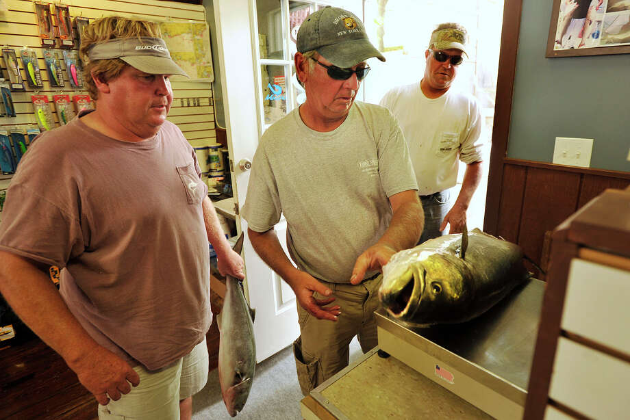 Greenwich residents from left: Brad Cox, Andy Belicka, and Jim Cox weigh one of their fish at Rudy's Tackle Barn in Greenwich, Conn., one of the official weigh stations, during the Port Jefferson Ferry WICC600 Greatest Bluefish Tournament on Earth on Sunday, Aug. 24, 2014. Photo: Jason Rearick / Stamford Advocate