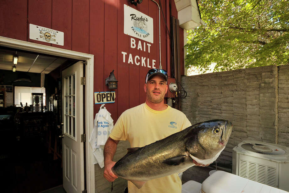 Danny Ortiz, owner of Rudy's Tackle Barn in Greenwich, Conn., shows off one of the top weighing fish that was brought in by an angler during the Port Jefferson Ferry WICC600 Greatest Bluefish Tournament on Earth on Sunday, Aug. 24, 2014. The fish, at the time, was in fourth place with the weight of 15.77 pounds. Photo: Jason Rearick / Stamford Advocate