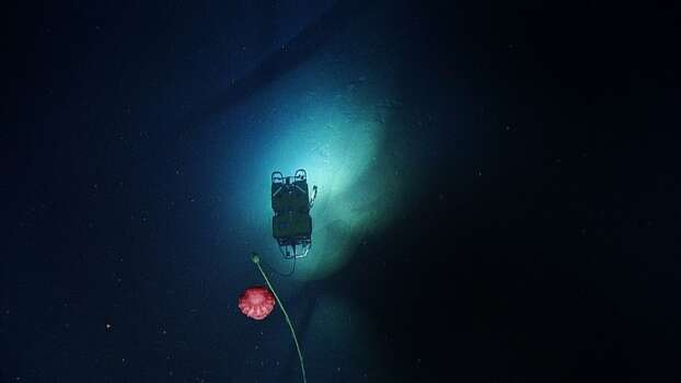 That red blob is a sea cucumber. Photo: Ocean Exploration Trust